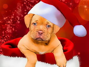Christmas Dogs Styles